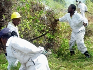 Health officials bushing a swamp area, which is a breeding ground for mosquitoes - File.