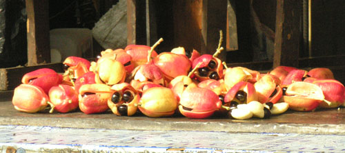Jamaica's National Fruit - The Ackee